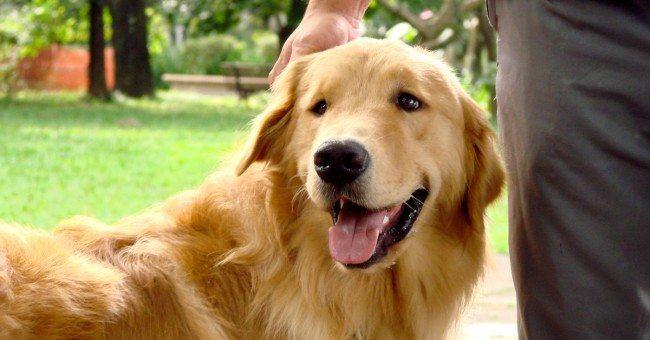 Toddy - Aluno da Tudo de Cão