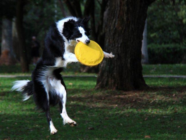 Radha brincando de frisbee