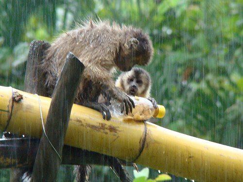 Enriquecimento Ambiental para macacos