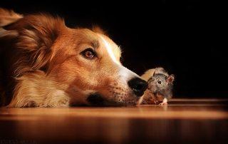 cão e ratinho