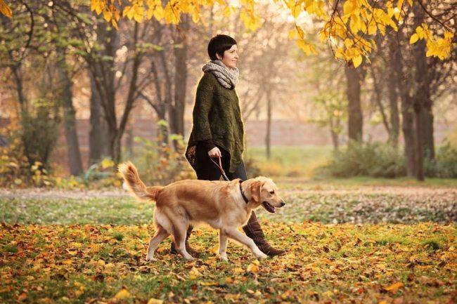 cão e dono passeando