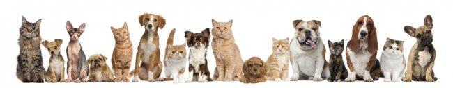 grupo de cães sentados
